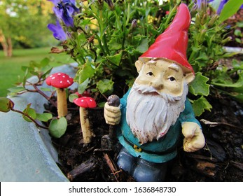 Garden Gnome Smiling and Happy in the Garden