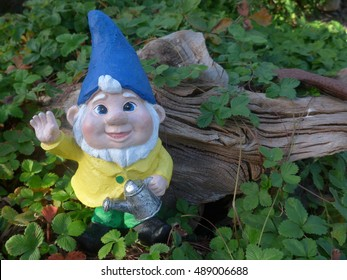 Garden Gnome with watering can in front of a tree root