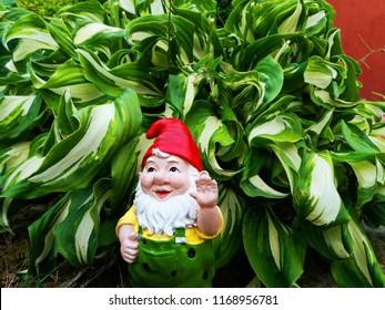 garden gnomes among plants