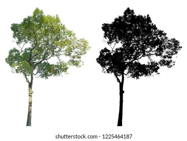 a garden green leaves tree with black alpha mask isolated on white background.