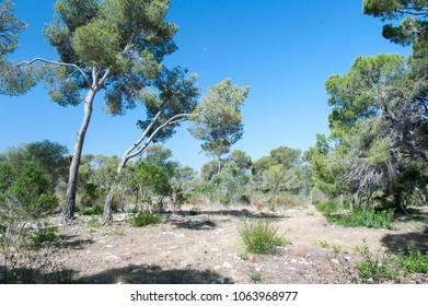 garden h in Majorca