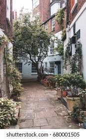 Garden in Hampstead