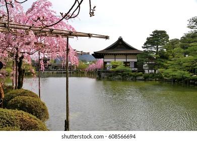 The garden of Heian-jingu Shrine, Kyoto, Japan : April 5, 2008