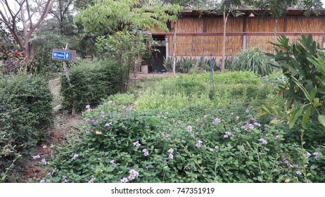 garden of herbs in the countryside