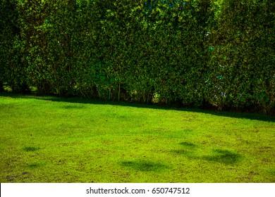 The garden at home.