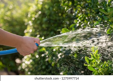Garden and Housework concept. Female hand hold blue rubber hose and close hole by thumb finger to make water spray with blurred sunlight foliage bokeh background.