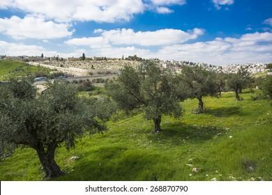 Garden of  Jerusalem, Israel