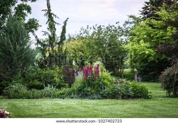 Garden Landscape Conifers Ornamental Shrubs Flowers Stock Photo