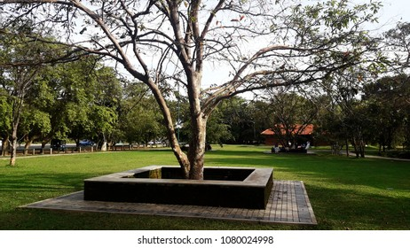 Landscaping In Sri Lanka Images Stock Photos Vectors Shutterstock
