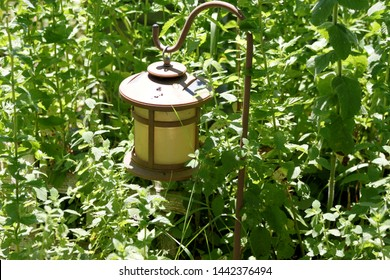 garden lantern,  seen at the community garden in the bedford Stuyvesant section of Brooklyn on a sunny summer day in Brooklyn NY July 4 2019