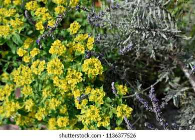 Garden Lavender and Yellow Flowers Behind Netting