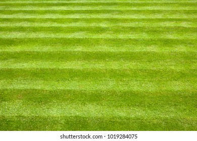 Garden lawn with mower stripes