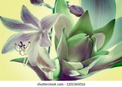 garden lilies and flowers, buds and petals close-up. abstract composition, background.