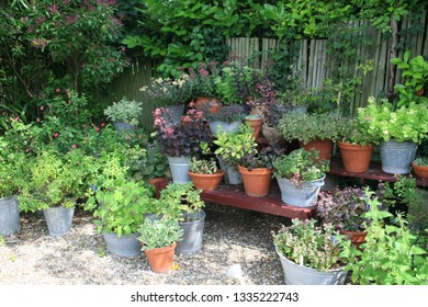 garden with lots of pottery