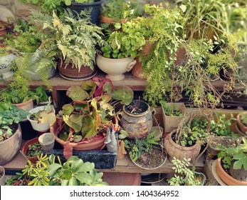 Garden with lots of pottery And various plants.