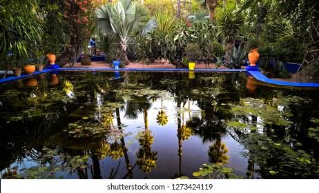 Garden Marocco  plant