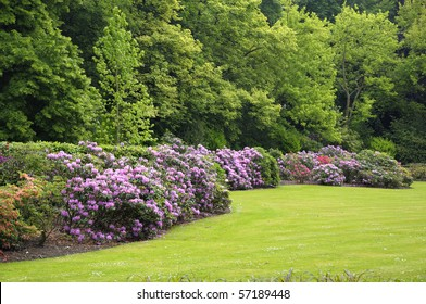 Garden in north of Brussels in spring with rhododendron flowers