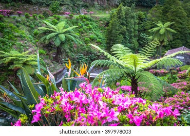 Garden on Sao Miguel island, Azores. It is located in the midst of this magnificent water system.