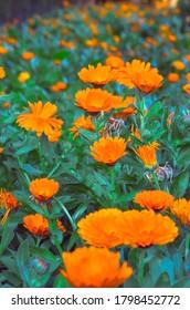 jardín con flores anaranjadas en alcazar español