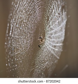 Garden orb weaver spider and its prey