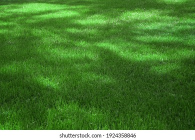 Garden Or Park Shady Fresh Lawn With Green Grass Background Or Emerald Texture. Focus Selective. Emerald Grass Wallpaper