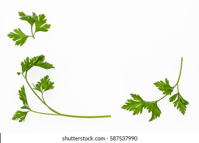garden parsley leaves on white background