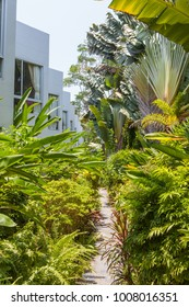 A garden path through tropical plants with part of a building seen to the left.