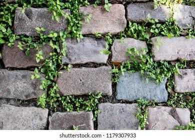 Garden pathway of bricks