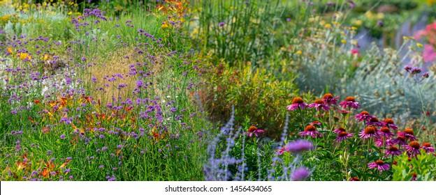 the garden with perennial flower