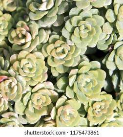 garden plant flower