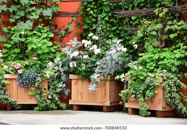 garden in planter boxes