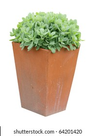 Garden Planter with succulent plant isolated with clipping path