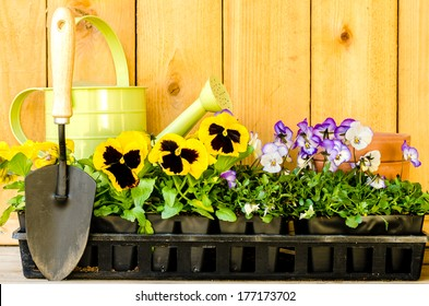 Garden planting with violas, pansies, watering can, trowel, and pots on wood background.