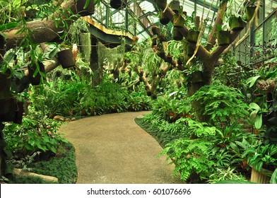 Garden Plants in Kebun Raya Bogor, Indonesia