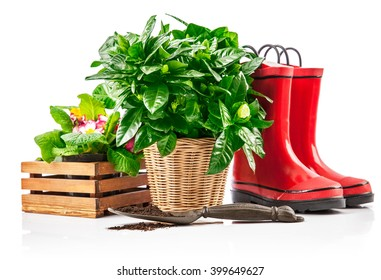Garden plants in wicker basket from red boots and spade. Isolated on white background