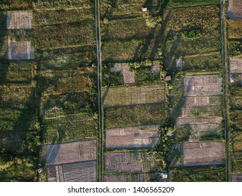 garden plots and spring plantings with even rows of ruin and greenhouses
