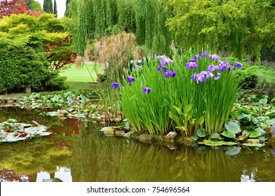 Garden pond with water flowers