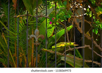 A garden populated with a variety of plants exists behind a wrought iron fence.