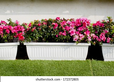 garden pot with colorful flowers