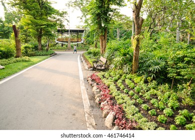The garden with road