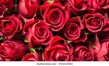 Garden rose: a species of Roses, also known as china rose, bengal rose, it's botanical name is rosa chinensis.