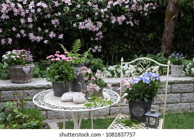 garden scene in spring with clematis in pink