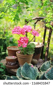 garden scene with vintage flower pots and pelargonium, gardening and floriculture theme