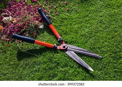 Garden scissors on grass