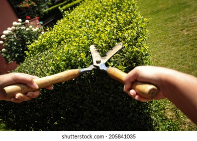 Garden shears cutting a hedge