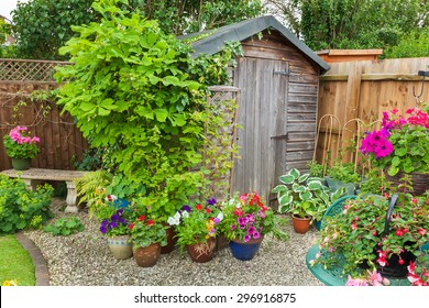 Garden shed surrounded by colorful potted plants and shrubs.
