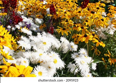 A garden showing the lovely contrast between white shasta daisies and rich yellow  rudbeckia daisies.