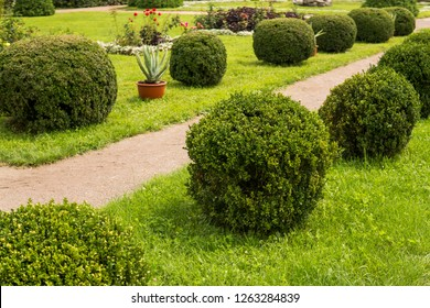 Garden with shrubs bush and green lawns, landscape design.
