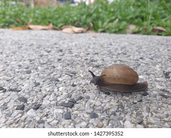 Garden snail crawling slowly on its way