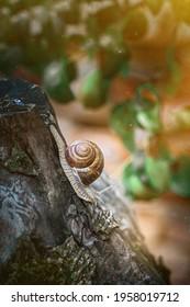 Garden snail on a walk after the rain - Shutterstock ID 1958019712